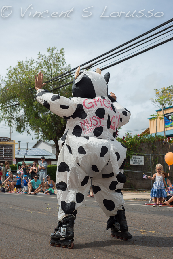 A man dressed as an anti-gmo cow, rollerblading.  This entire get-up hurt my head.