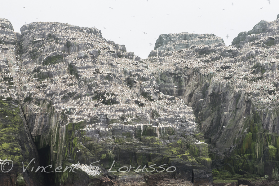 The poop covered island of Little Skellig.